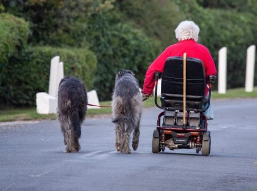 walking dogs in a mobility scooter